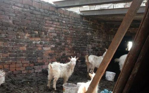 Znęcanie nad zwierzętami w gminie Nakło. Prowadzone jest postępowanie